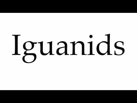 Header of iguanids