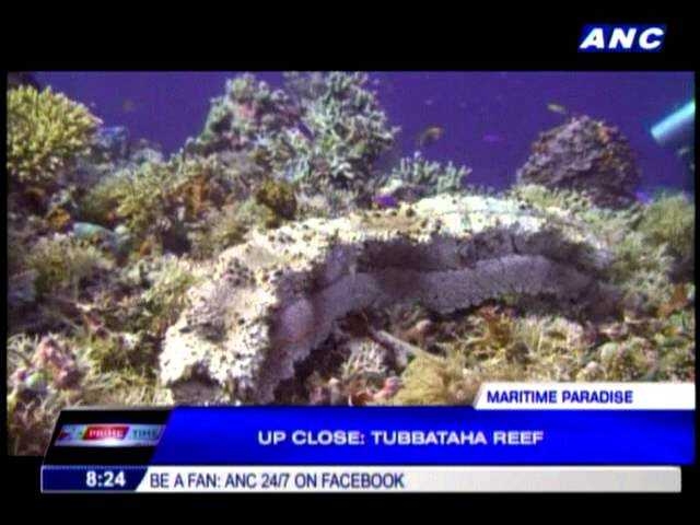 Up close: Tubbataha Reef