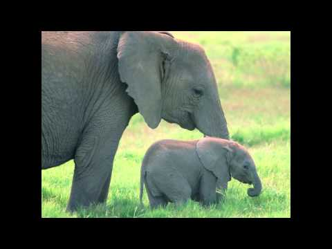 Food for Animals - Elephants