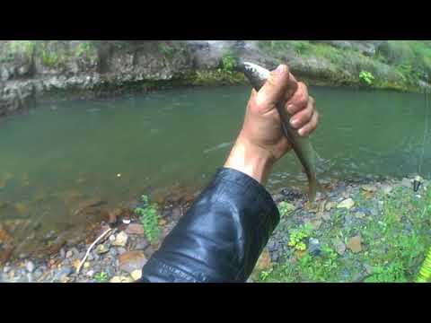 немного рыбалки (хариус осень)