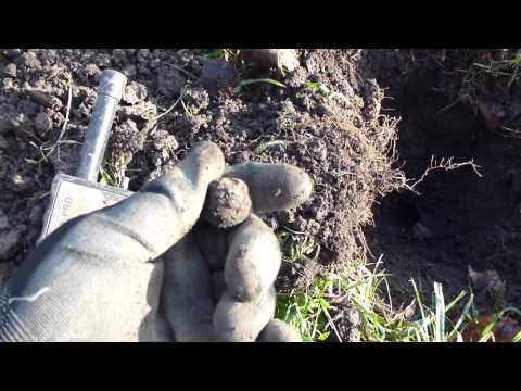 Metal detecting with Mal & XTerra 705 on the Plague Farm