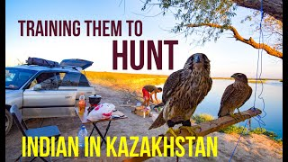 How to Train a Falcon (Falconry) | Indian in Kazakhstan | Travel Vlog 4 | Eagle Hunting