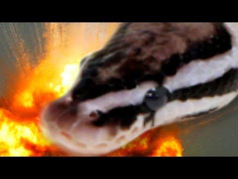 THIS SNAKE AND MORE! SnakeBytesTV