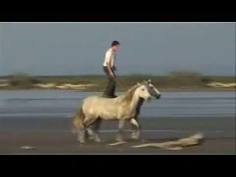 Horsemanship!! Natural! PNH! NHE ect. ! :D Y