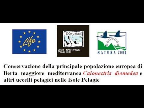 Life Pelagic Birds - intervento nel corso dell'evento MIPP Life in Sicilia