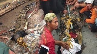 Terkuak Pemilik Buaya yang Gegerkan Warga di Kali Sasak Mojolaban Sukoharjo