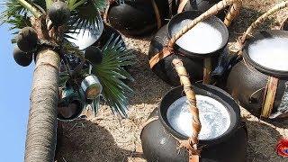 Juice of toddy palm   Palmyra palm juice natural alcohol   Cookingfood
