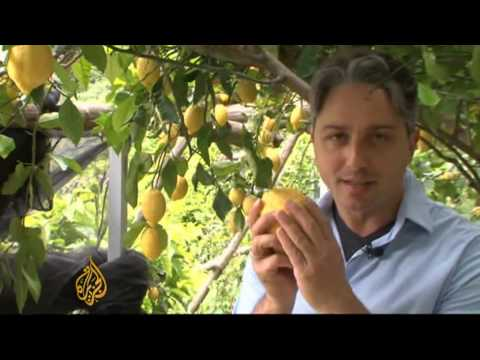 Italy's lemon growers sour on globalisation