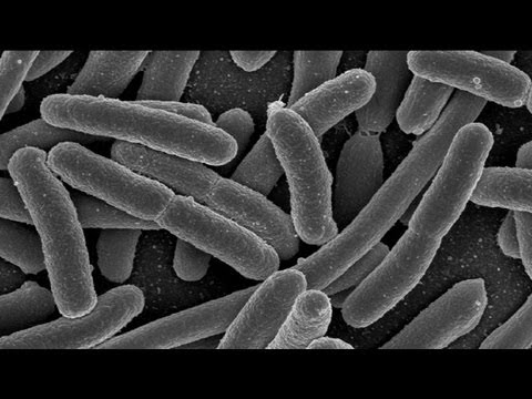 Gut Microbes in Early Life Have Effect on Adult Emotions