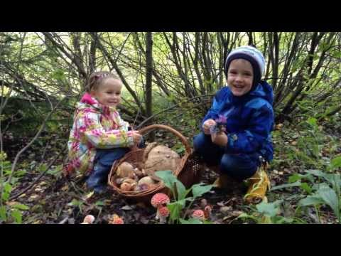 Дети рассуждают про грибы