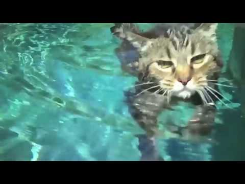 Swim Kitty