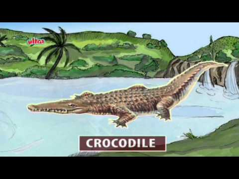 Play & Learn Reptiles - Animated Series