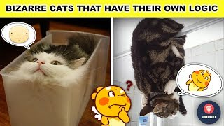 Funny Pictures #5: Bizarre Cats That Have Their Own Logic