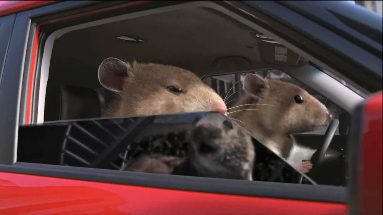 Kia Soul Hamster Commercial In Hd High Definition Youtube