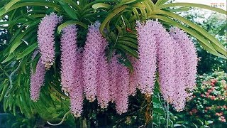 The Most Beautiful Orchids in the World