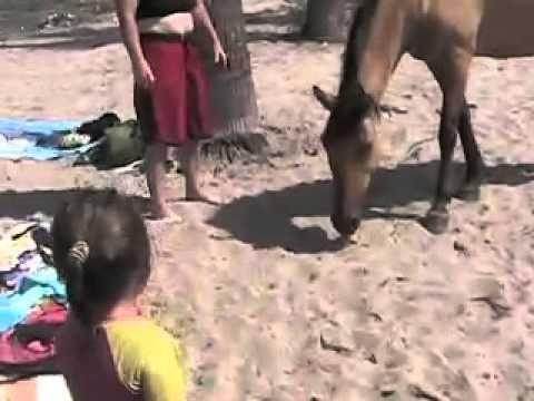 kb jpeg pedigree dog and horse breeding dog breeding simulation games ...