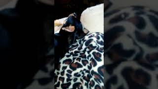 My little dog.just be so happy when lol.he git;s off work to see his girl....