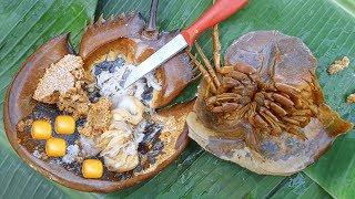 Lần Đầu Ăn Thử Sam Biển Khổng Lồ & Cái Kết . Sam Biển Hấp Trái Điều . Do Horseshoe Crabs STING?