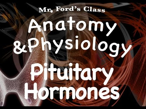 Endocrine System: Pituitary Hormones (12:04)