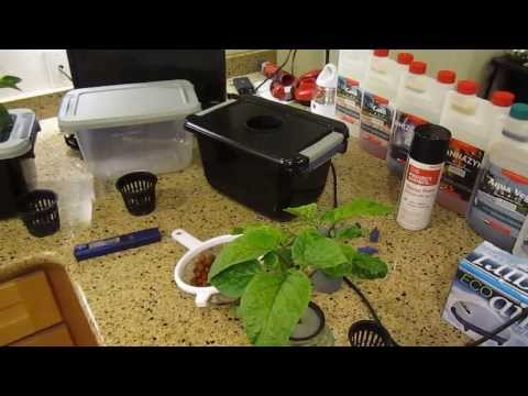 How To Build A Dwc Hydroponic System  $15