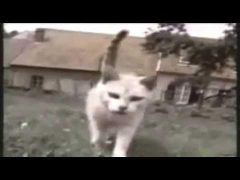 Śmieszne koty - Najlepsze