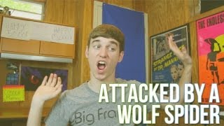 Attacked by a Wolf Spider