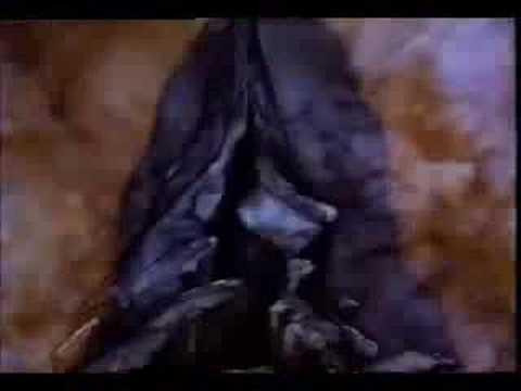 drizzt dourden wallpapers. Drizzt Dourden Videos | Drizzt Dourden Video Codes | Drizzt Dourden Vid