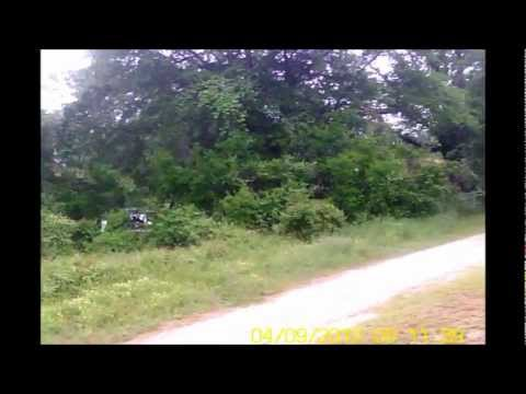 Exceed RC Falcon 40 RC helicopter flying (worth watching!)