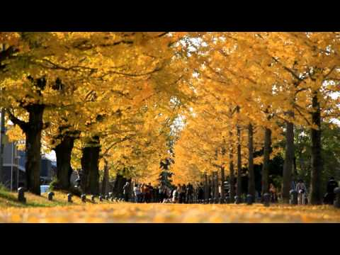 【Goovie5D】各務原市 学びの森プロムナード ~冬ソナストリート~