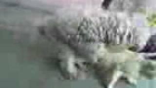 Dog Cat sex XXX