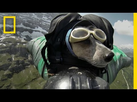 Dean Potter Base Jumps With His Dog video