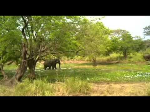 Wasgamuwa National park Safari . (Sri Lanka)