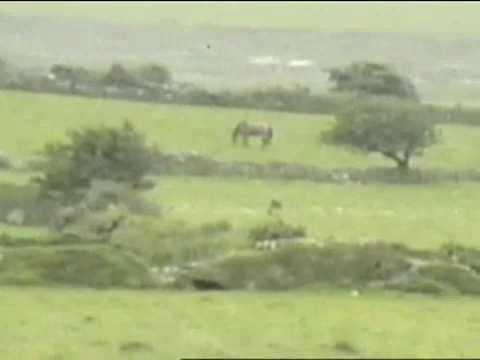 Big Cat Sightings Wales