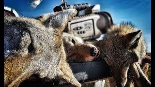 Wyoming Public Land Coyotes!! The Last Stand S1, E4