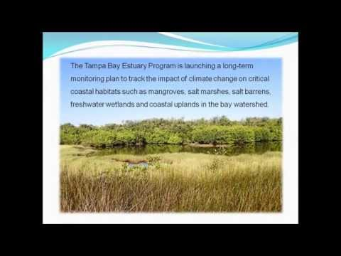 TBEP Critical Coastal Habitat Monitoring