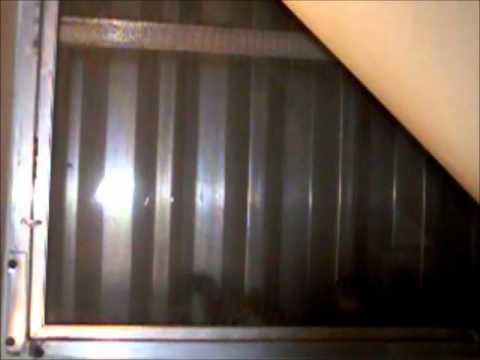 Squirrel Kits, 2012 Edition video