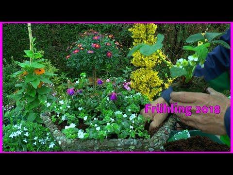 Blumen Kübel Frühjahr Sommer Bepflanzung Margeritten Stämmchen Erdbeeren und andere Blumen