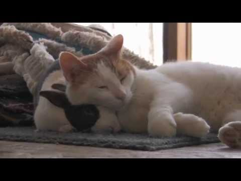 Cat & Bunny best friends