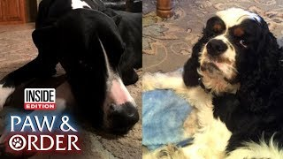 Paw & Order: Great Dane and Cocker Spaniel Make a Mess in Texas