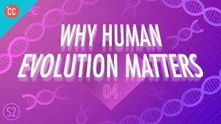 Why Human Evolution Matters: Crash Course Big History 205