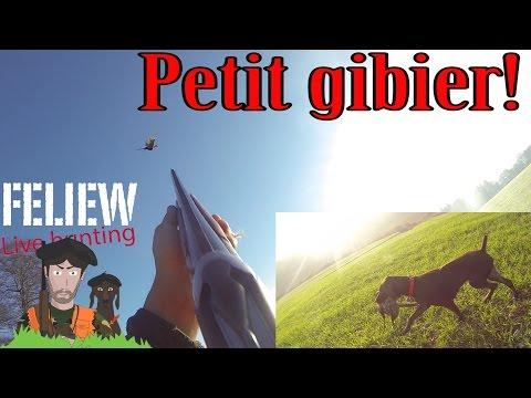 Chasse Au Petit Gibier Dans Les Vosges, Une Belle Journée!