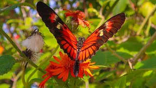THOUSANDS OF BUTTERFLIES at Butterfly World Florida! Bug Zoo, Botanical Garden & Crazy Bridge!