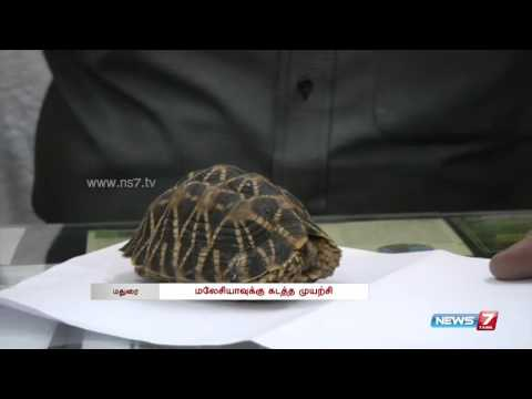 Madurai airport officials seize turtles from smugglers | Tamil Nadu | News7 Tamil |