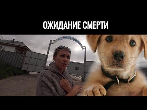 30 дней до СМЕРТИ... Астана ветсервис Казахстан Видео про бродячих животных Смерть или Жизнь