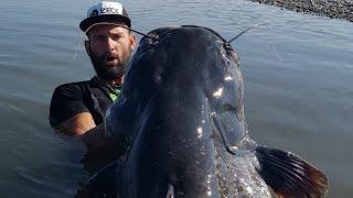 BIG FISH CATCHING VIDEO - HD by CATFISH WORLD