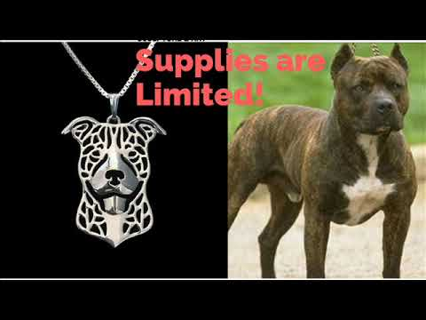 Awesome Pitbull Pendant Necklace for Pitbull Lovers only!!