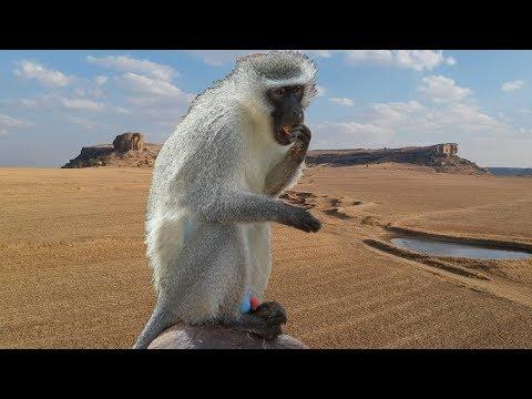 ДОЛИНА ОДИНОЧЕСТВА, где живут обезьяны с синими яйцами! Африка, часть 7