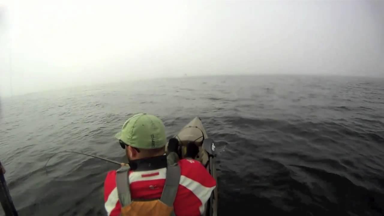 50 pound black sea bass dana point headlands youtube for Fish count dana point