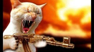 Recopilación Gatos Chistosos 2015. Vídeos De Gatos Que Dan Risa