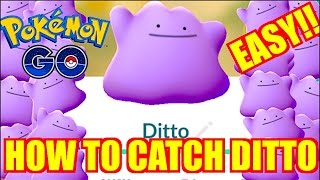 HOW TO CATCH DITTO (EASY) IN POKEMON GO!! LIVE CATCHING A DITTO!